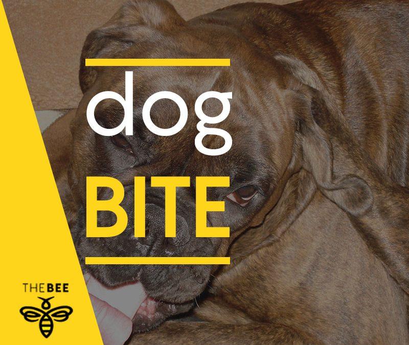 Owner Sought In Dog Bite Incident