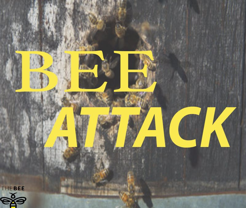 Aggressive Bees Send One To Hospital