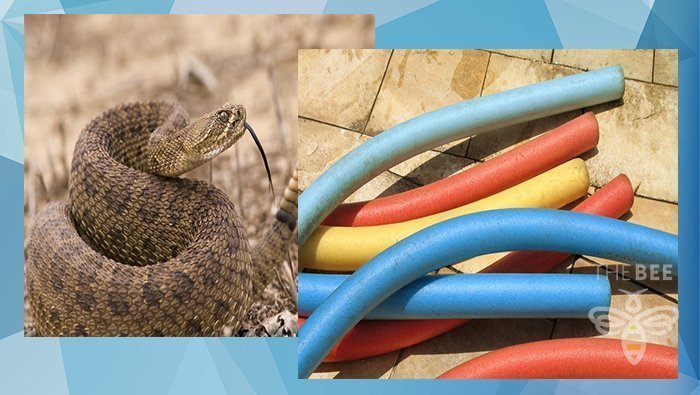 Buckeye Fire Department Warns Of Snakes Hiding In Pool Noodles