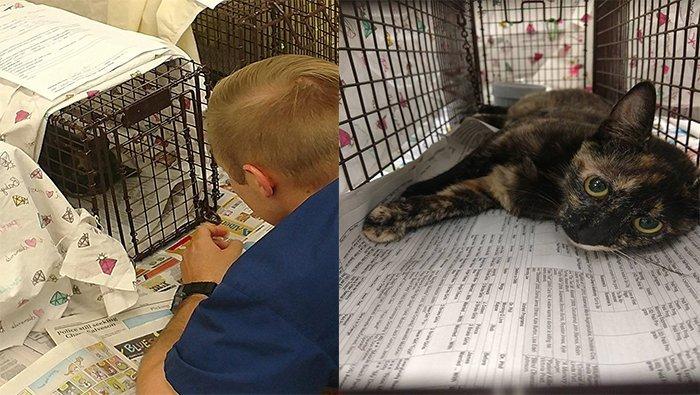 Fundraiser To Benefit Feral Cat Program