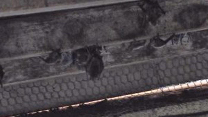 "AZGFD Goes ""Batty"" With Latest Live-Streaming Wildlife Camera"