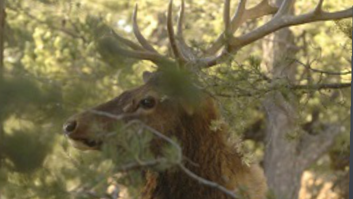 AZGFD Information Booklets Available For Antelope And Elk Hunt/Draw