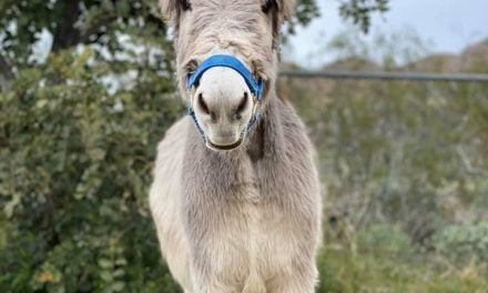 LIFE OF WALTER THE ORPHAN DONKEY TO BECOME A BOOK!