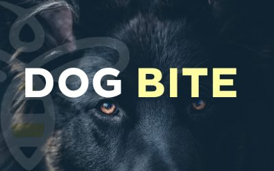 Dog Bite – Officers are looking for a Stray Dog for standard Quarantine Procedures