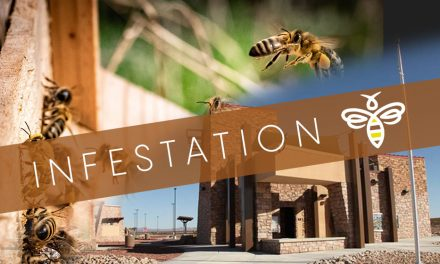 Southern Nevada Visitors Center Near Searchlight Closed Due to Bee Infestation