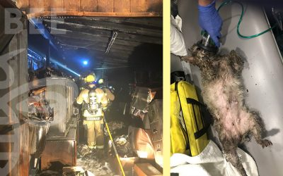 Press Release Fido bag used to save dog pulled from house fire