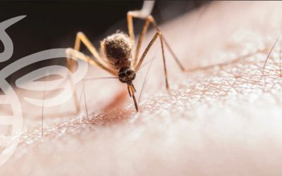 SURVEILLANCE LEADS TO ADULT MOSQUITO CONTROL