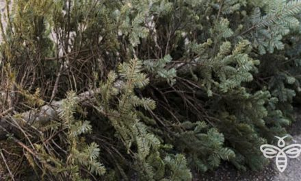 City Offering Christmas Tree Recycling Program