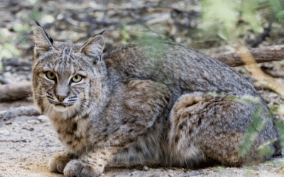 Clark County Commission Approves Resolution to Condemn Wildlife Killing Contests
