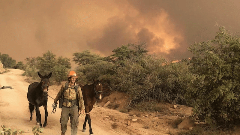 Ducey, Legislative Leaders Announce Major Investment To Fight Wildfires, Post-Fire Flooding Risks